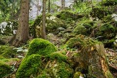 härlig skog Royaltyfri Fotografi