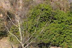 Härlig skog - Afrika Arkivbilder