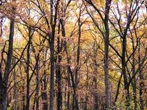 härlig skog för höst arkivfoto