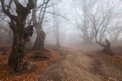 Härlig skog för höst Arkivbilder