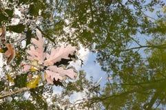 Härlig skog i höst Royaltyfria Bilder