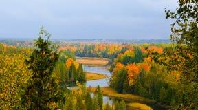 Härlig skog i höst Royaltyfria Foton