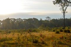 Härlig skog i höst Fotografering för Bildbyråer