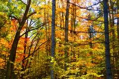 Härlig skog i höst Arkivfoton