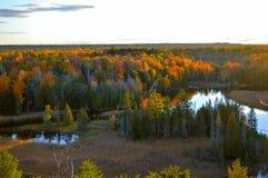 Härlig skog i höst Arkivbild