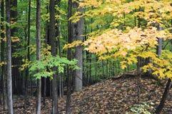 Härlig skog i höst Royaltyfri Fotografi