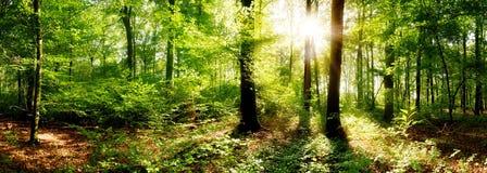 Härlig skog i ljust solsken arkivfoto