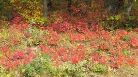 Härlig skog i nedgången royaltyfri foto