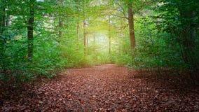 Härlig skog i sommaren royaltyfri fotografi