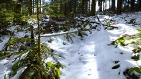 Härlig skog i vinter i den Kirchschlag beien Linz i Upper Austria arkivfilmer