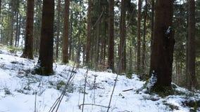 Härlig skog i vinter i den Kirchschlag beien Linz i Upper Austria lager videofilmer