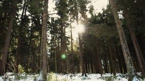 Härlig skog i vinter i den Kirchschlag beien Linz i Upper Austria stock video
