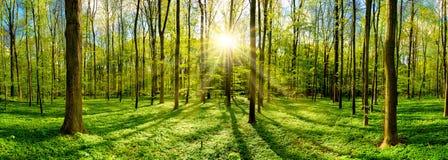 Härlig skog med den ljusa solen royaltyfri fotografi