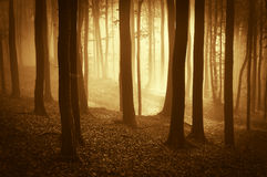 Härlig skog med dimma på soluppgång Fotografering för Bildbyråer