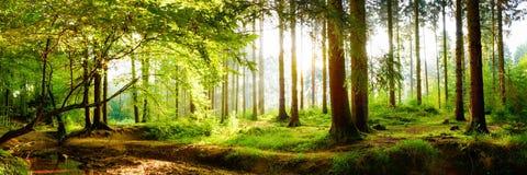 Härlig skog med ljust solljus i bakgrunden royaltyfri fotografi