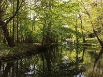 Härlig skog med solljus i Danmark nära Köpenhamn royaltyfria foton