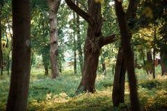 Härlig skog med trädstammar Arkivfoto