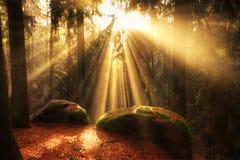 Härlig skog och solstrålar royaltyfri foto