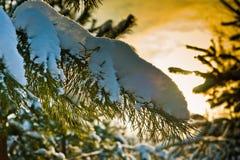 Härlig skog på solnedgången Arkivbilder