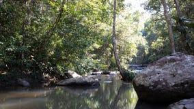 Härlig skog på vattenfallet i mitt land royaltyfria foton