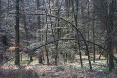 Härlig skog Tyskland Arkivfoton