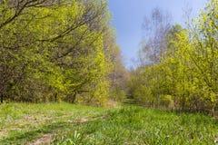 Härlig skogbana i tidig fjäder Royaltyfria Bilder