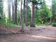 Härlig skogbana i träna Royaltyfria Foton