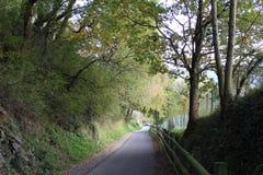 Härlig skogbana på bergen Royaltyfri Bild