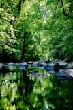 härlig skogflod Royaltyfri Bild