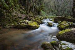 Härlig skogflod Arkivbilder