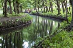 härlig skogflod Morgon i parkera Royaltyfri Foto
