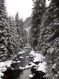 härlig skoglandskapvinter Royaltyfria Bilder