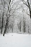 härlig skoglandskapvinter Arkivfoton