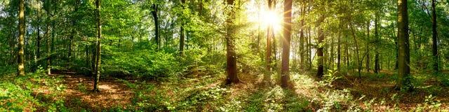 Härlig skogpanorama fotografering för bildbyråer