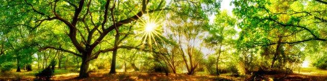 Härlig skogpanorama royaltyfri fotografi
