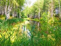 Härlig skogpong Royaltyfri Bild