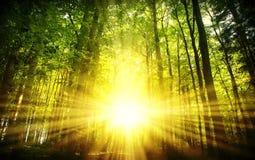 härlig skogsolnedgång Arkivbild