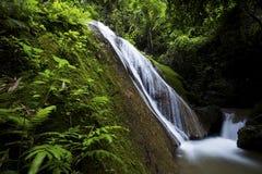 härlig skogvattenfall Arkivfoton