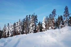 härlig skogvinter Arkivbild