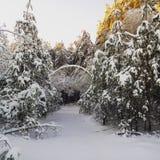 härlig skogvinter Arkivbilder