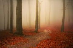 Härlig slinga i dimmig skog Fotografering för Bildbyråer