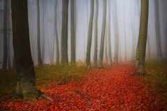 Härlig slinga i dimmig skog Royaltyfri Bild