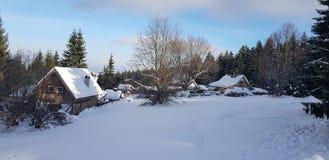 Härlig snö och träd för vinterplatswhit fotografering för bildbyråer