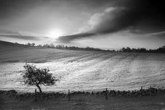 Härlig snö täckte lantligt landskap för soluppgångvinter i monochr royaltyfri bild