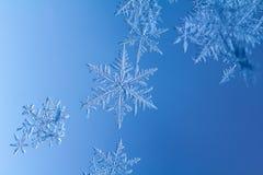 Härlig snöflinga på ett ljust - blått bakgrundsslut upp royaltyfri fotografi
