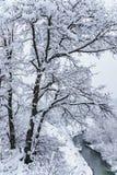 Härlig snöig bergskog och Afips-flod Molnigt sceniskt vinterlandskap Västra Kaukasus vertikalt landskap royaltyfri bild