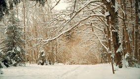 Härlig snöig skog i December för jul stock video