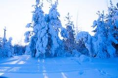 Härlig snöig vinter i Ryssland Royaltyfri Fotografi
