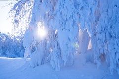 Härlig snöig vinter i Ryssland Royaltyfri Foto