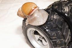 Härlig snigel på det svarta hjulet Royaltyfri Foto